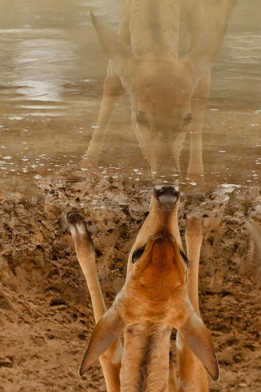 10 November 2012 as the deer pants