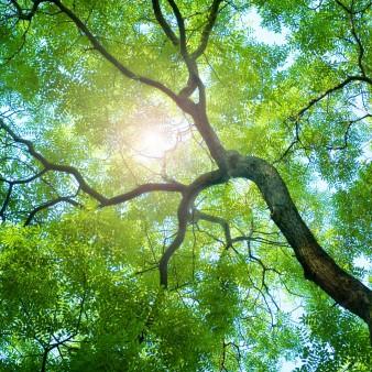 3 November 2012 sun-through-trees