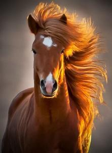 Amazingly_photogenic_horse