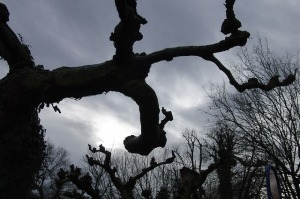 tree-101097_640