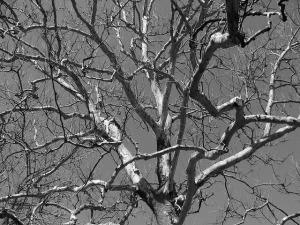 tree-17831_640