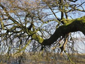 tree-270959_640