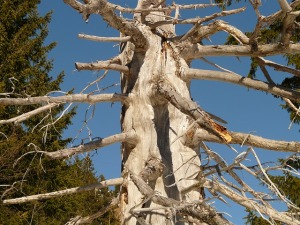 tree-5561_640