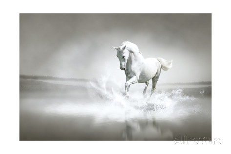 varijanta-white-horse-running-through-water
