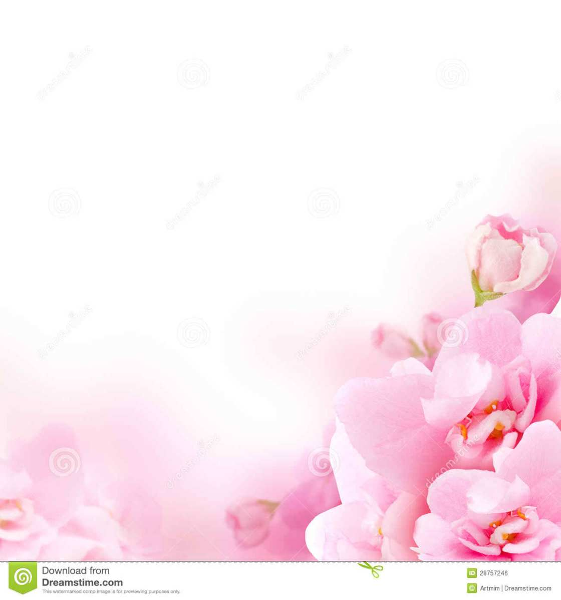 white-Pink-Flowers-Background