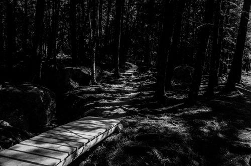 Acadia-Spooky-Woods-II